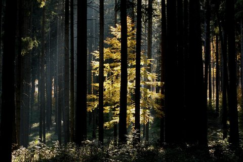 FOTKA - strom za stromy