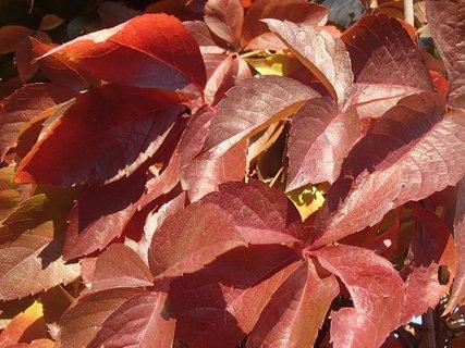 FOTKA - 2012 farby jesene87