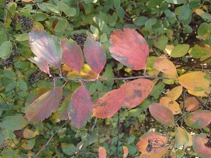 FOTKA - 2012 farby jesene88