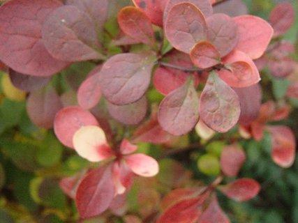 FOTKA - 2012 farby jesene89