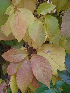 FOTKA - 2012 farby jesene90