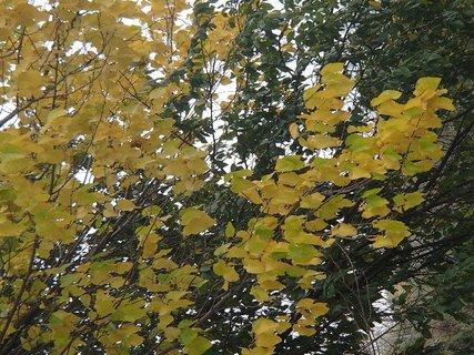 FOTKA - žltá a zelená