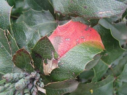 FOTKA - aj takto farbí jeseň