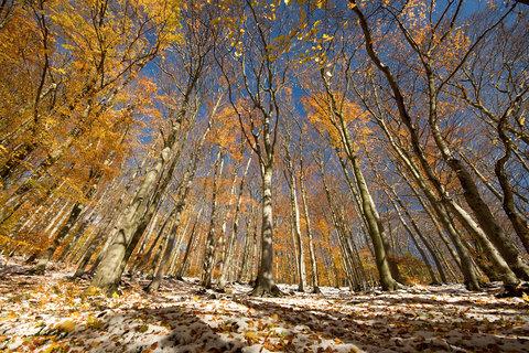 FOTKA - Bukový les...