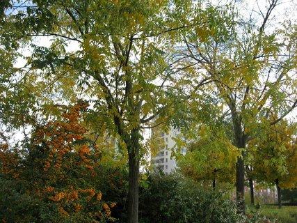 FOTKA - Podzim na sídlišti  3