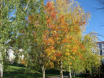 FOTKA - Podzim na s�dli�ti  4