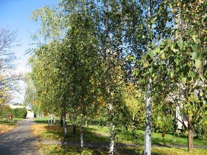 FOTKA - Podzim na sídlišti  5