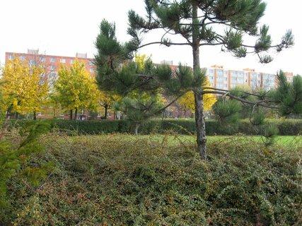 FOTKA - Podzim na sídlišti  6