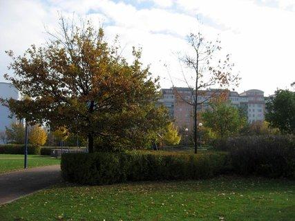 FOTKA - Podzim na sídlišti  8