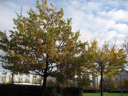 FOTKA - Podzim na sídlišti  9