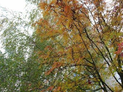 FOTKA - Podzim na sídlišti  10