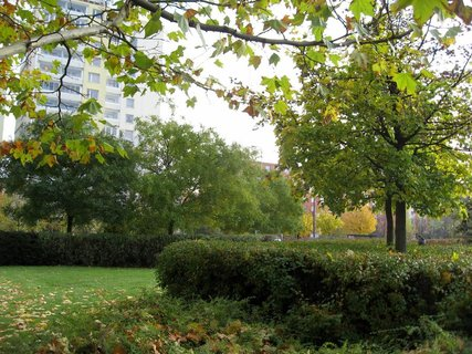 FOTKA - Podzim na sídlišti  12