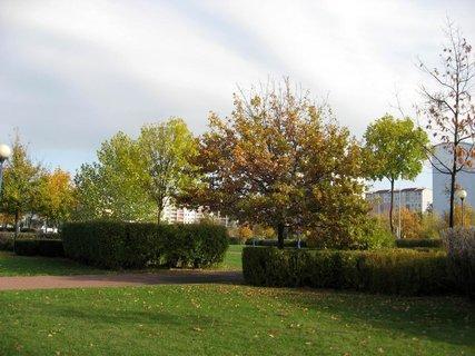 FOTKA - Podzim na sídlišti  13