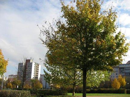 FOTKA - Podzim na sídlišti  14