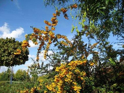 FOTKA - Podzim na sídlišti  16