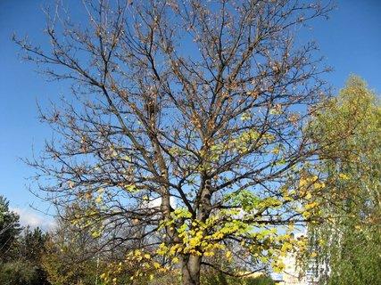 FOTKA - Podzim na sídlišti  19