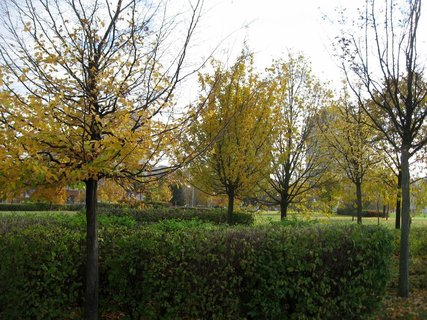 FOTKA - Podzim na sídlišti  20