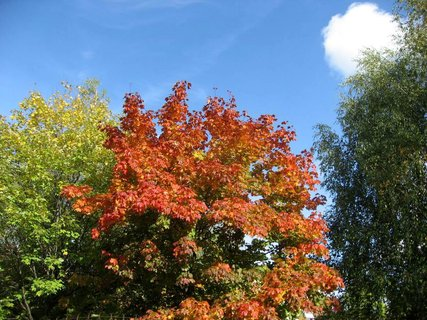 FOTKA - Podzim na sídlišti  23