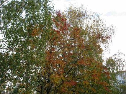 FOTKA - Podzim na sídlišti  24