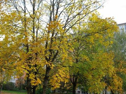 FOTKA - Podzim na sídlišti  25