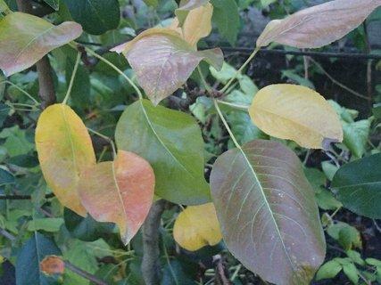 FOTKA - 2012 farby jesene95