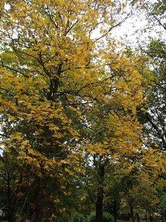 FOTKA - stromy v parku