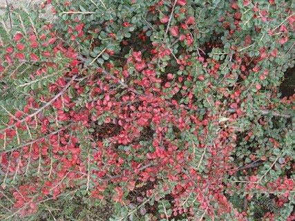 FOTKA - 2012 farby jesene103