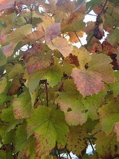 FOTKA - 2012 farby jesene108