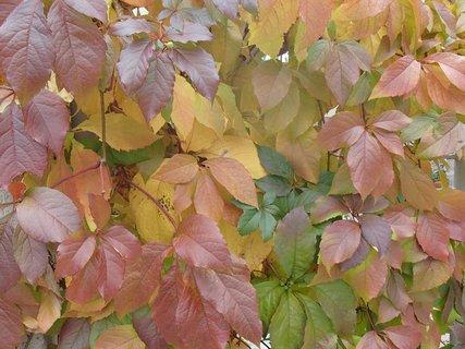 FOTKA - 2012 farby jesene109