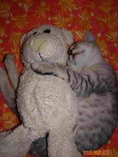 FOTKA - kočky 2012-22