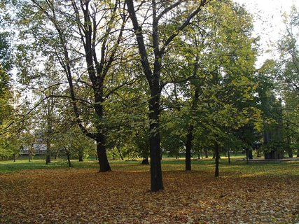 FOTKA - stromy v parku.
