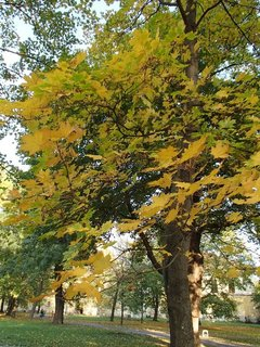 FOTKA - stromy v parku..