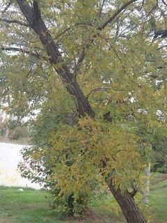 FOTKA - nahnutý strom
