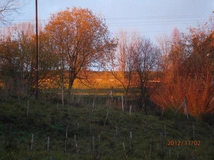 """FOTKA - Dnešní západ slunce-""""zlaty les"""",,,"""