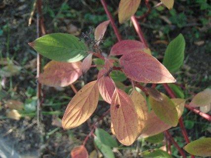 FOTKA - 2012 farby jesene121
