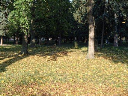 FOTKA - svetlo a tie� v parku