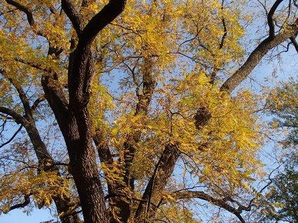 FOTKA - strom v oblohe