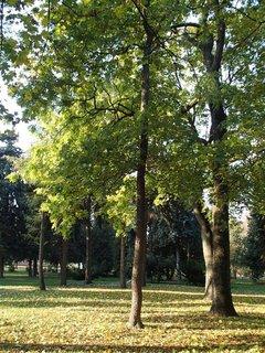 FOTKA - z prechádzky v parku.