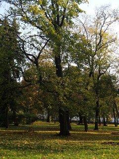 FOTKA - z prechádzky v parku..