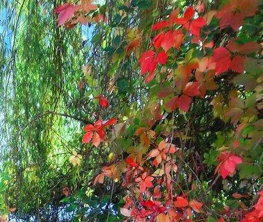FOTKA - Podzim u vody ..