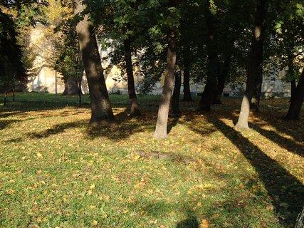 FOTKA - slnko a tieň.