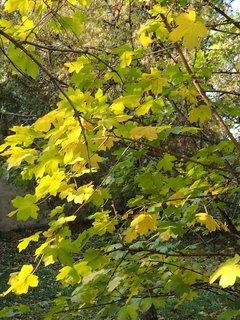 FOTKA - 2012 farby jesene137