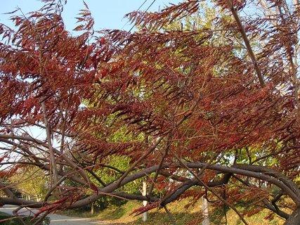 FOTKA - 2012 farby jesene141