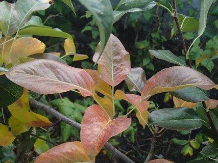 FOTKA - 2012 farby jesene143