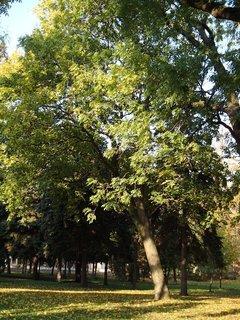 FOTKA - stromy v parku.,