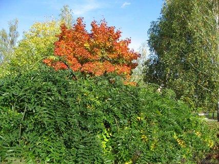 FOTKA - Podzim na sídlišti 26