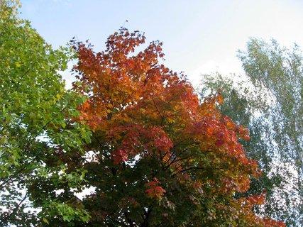 FOTKA - Podzim na sídlišti 27