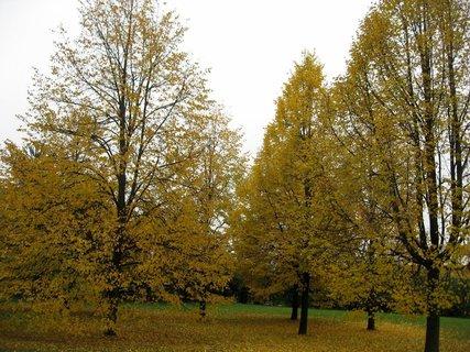 FOTKA - Podzim na sídlišti 28