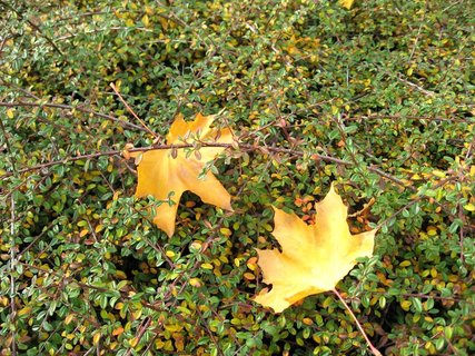 FOTKA - Podzim na s�dli�ti 29