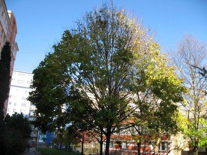 FOTKA - Podzim na sídlišti 30